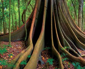 Hinterland-tree (Custom)